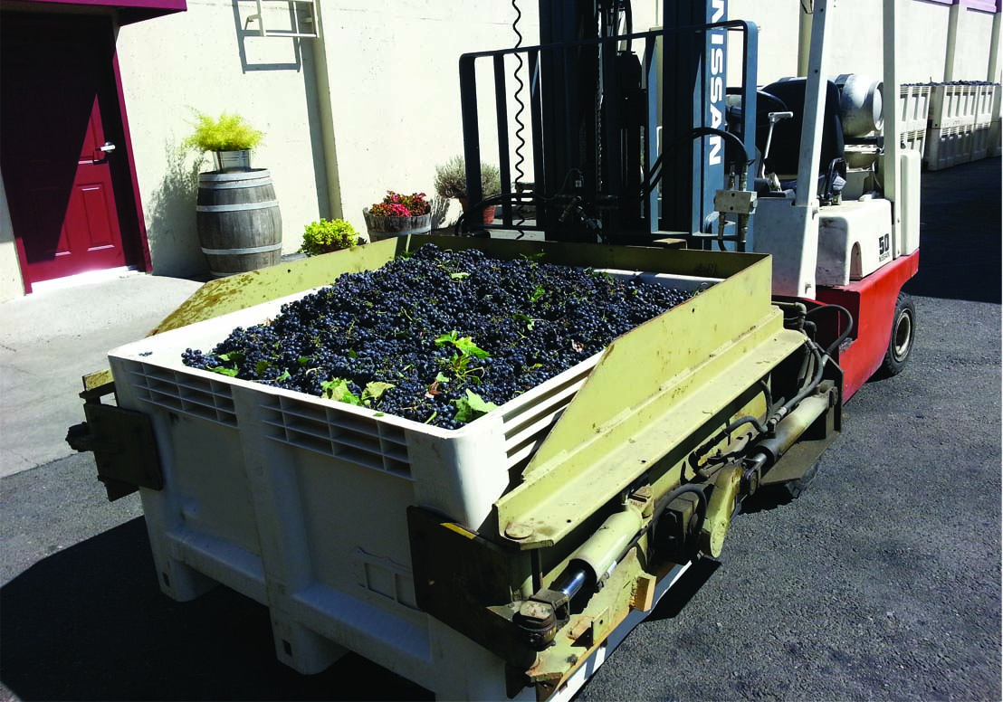 grapes being crushed